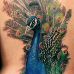 realistic peacock tattoo design