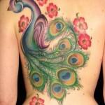 colorful peacock tattoo design